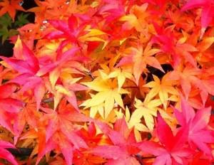 autumn_5